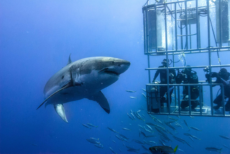 Sport Cape Town Huey Helicopter | Tours | Shark Cage Diving